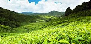Cameron Highlands Hotels