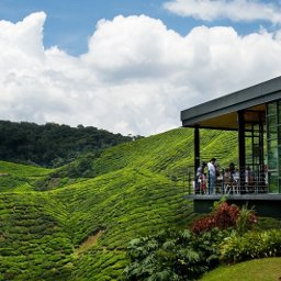 How to go to Cameron Highlands