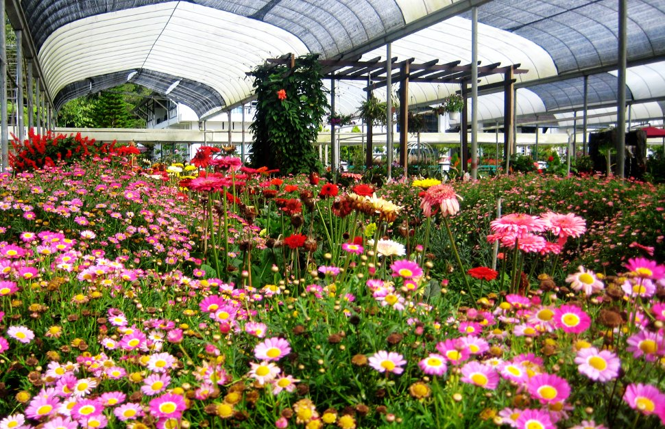 Flower farm at Cameron Highlands