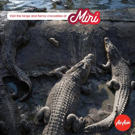 Visit the large and fierce crocodies of Miri